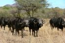 Serengeti_11