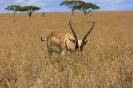 Serengeti_16